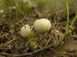 С пользой для желудка: как собрать и приготовить грибы, не отравившись