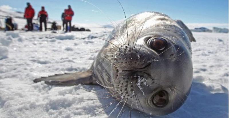 За убийство тюленей, незаконные заборы и рассыпание соли на газонах будут штрафовать