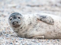 В Петербурге пять тюленей в скором времени выпустят в Финский залив