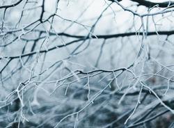 В субботу жителей Ленинградской области ждут заморозки