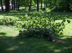 Сильный ветер повалил десятки деревьев