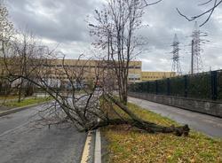 Ураганный ветер в Санкт-Петербурге за день повалил 72 дерева
