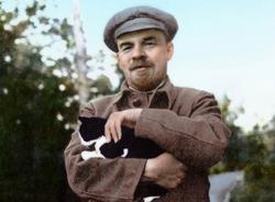 В доме на Литейном проспекте поселились «Революционные коты»