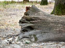В Петербурге из-за ветра упало больше 60 деревьев