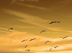 Ученые просят не кормить птиц, которые массово мигрируют над Петербургом